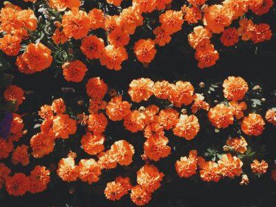 bloemen voor uw boeket