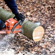 Machines die een boom verwijderen uit de tuin vergemakkelijken