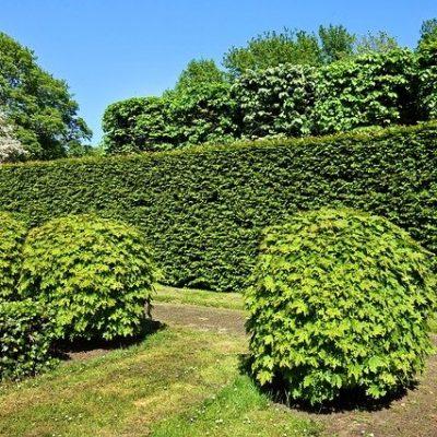 Met deze haagplanten maak jij de mooiste erfafscheiding